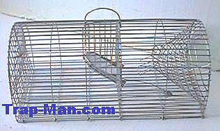 Monarch Rat Trap